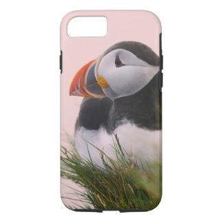 Coque iPhone 7 Macareux atlantique (arctica de Fratercula) 6