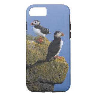 Coque iPhone 7 Macareux atlantiques (arctica de Fratercula) sur