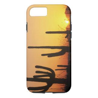 Coque iPhone 7 N.A., Etats-Unis, AZ, Saguaro NP, coucher du