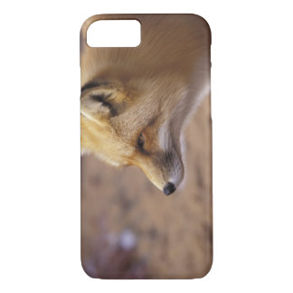 Coque iPhone 7 Na, Canada. Fox rouge