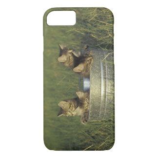 Coque iPhone 7 Na, Etats-Unis, la Floride, la Floride rurale.
