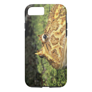 Coque iPhone 7 Na, Etats-Unis, la Floride, Miami.  Grenouille à