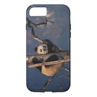 Coque iPhone 7 Panda de bébé jouant sur l'arbre, Wolong, Sichuan