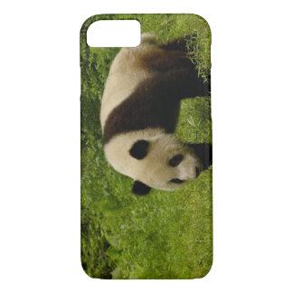 Coque iPhone 7 Panda géant (melanoleuca d'Ailuropoda) dans le son