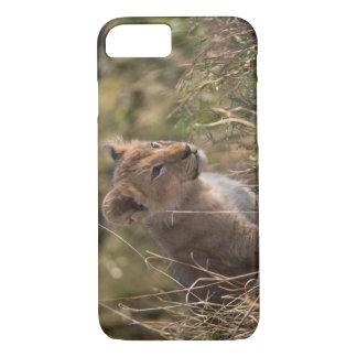Coque iPhone 7 Petit animal de lion (Panthera Lion),