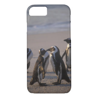 Coque iPhone 7 Pingouin africain (demersus de Spheniscus) ou âne