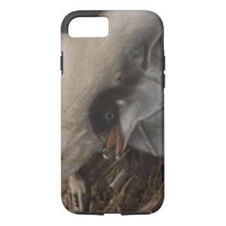Coque iPhone 7 Pingouin de Gentoo (Pygoscelis Papouasie) avec le