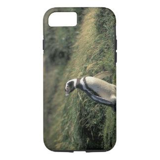 Coque iPhone 7 Pingouin de Magellanic (magellanicus de