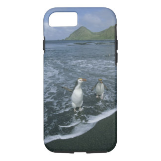 Coque iPhone 7 Pingouin royal, (schlegeli d'Eudyptes), retournant