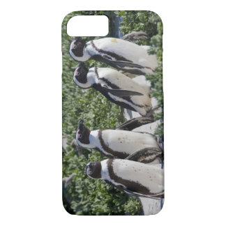 Coque iPhone 7 Pingouins africains, autrefois connus sous le nom