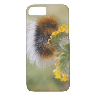 Coque iPhone 7 Plan rapproché de chenille sur la fleur. Crédit