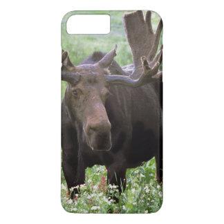Coque iPhone 7 Plus Alces d'Alces d'orignaux de Taureau) dans les