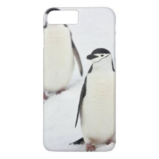 Coque iPhone 7 Plus Antarcticus de Pygoscelis de pingouins de