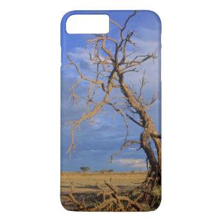 Coque iPhone 7 Plus Arbre mort d'épine de chameau (acacia Erioloba)