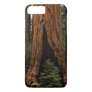 Coque iPhone 7 Plus Arbres de séquoia, parc national de séquoia