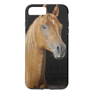Coque iPhone 7 Plus Bel Arabe de pur sang dans la stalle