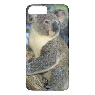 Coque iPhone 7 Plus Cinereus de koala, de Phascolarctos), l'Australie,