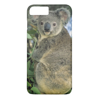 Coque iPhone 7 Plus Cinereus de koala, de Phascolarctos), mis en