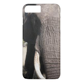 Coque iPhone 7 Plus Éléphant (africana de Loxodonta), camp 3 d'Abu