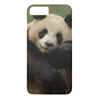 Coque iPhone 7 Plus Famille de melanoleuca d'Ailuropoda de panda
