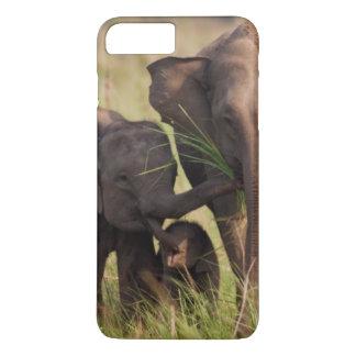 Coque iPhone 7 Plus Famille indienne d'éléphant asiatique dans la