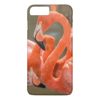 Coque iPhone 7 Plus Flamants roses chez Gatorland