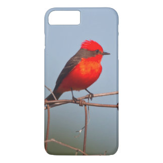 Coque iPhone 7 Plus FLYCATCHER vermillon (Pyrocephalus Rubinus)