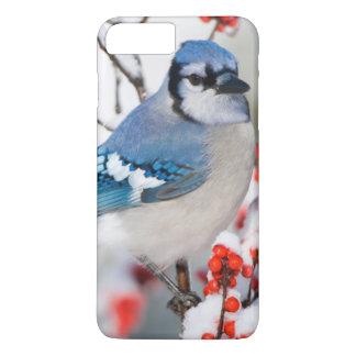 Coque iPhone 7 Plus Geai bleu dans le Winterberry commun