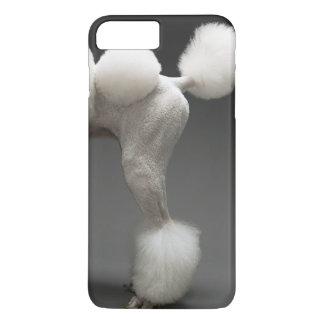 Coque iPhone 7 Plus Hanches de caniche, sur l'arrière - plan gris