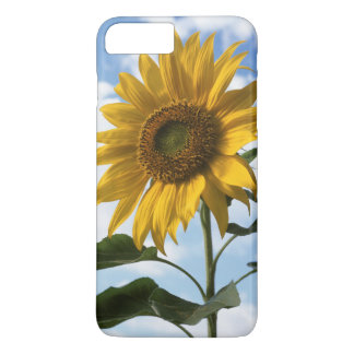 Coque iPhone 7 Plus La Californie, un tournesol gigantesque