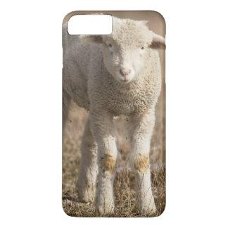 Coque iPhone 7 Plus La Pennsylvanie centrale, Etats-Unis, moutons