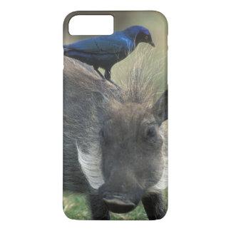 Coque iPhone 7 Plus L'Afrique du Sud, Pilanesburg GR, Warthog
