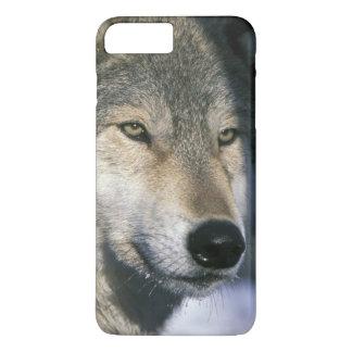 Coque iPhone 7 Plus L'Amérique du Nord, Etats-Unis, Minnesota. Canis 3