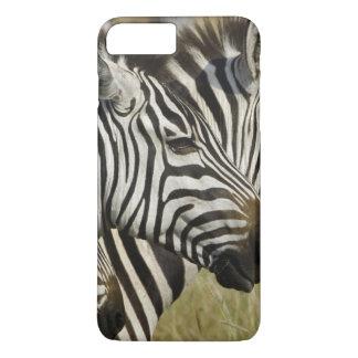 Coque iPhone 7 Plus Le zèbre de Burchelli, burchellii d'Equus, masai