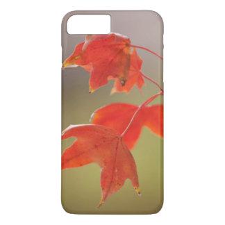 Coque iPhone 7 Plus Les Etats-Unis, le Kansas, feuille rouge dans