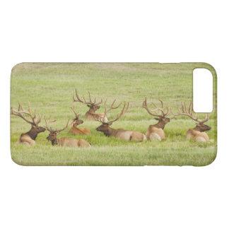 Coque iPhone 7 Plus Les Etats-Unis, Utah, groupe d'élans de taureau