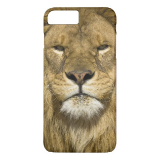 Coque iPhone 7 Plus Lion de Barbarie d'Africain, Panthera Lion Lion,