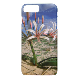 Coque iPhone 7 Plus Lis de Vlei (Nerine Laticoma) en fleur
