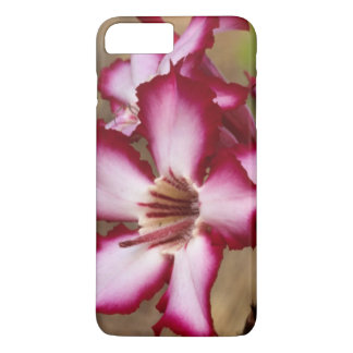 Coque iPhone 7 Plus Lis d'impala (Adenium Multiflorum), Kruger