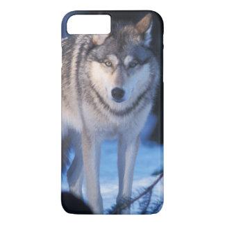 Coque iPhone 7 Plus loup gris, lupus de Canis, dans les collines des 3