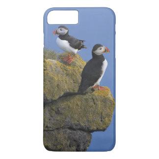 Coque iPhone 7 Plus Macareux atlantiques (arctica de Fratercula) sur