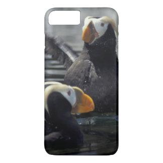 Coque iPhone 7 Plus Macareux tuftés de l'Alaska