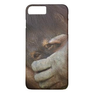 Coque iPhone 7 Plus Orang-outan de Sumatran, pygmaeus de Pongo