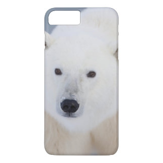 Coque iPhone 7 Plus Ours blanc