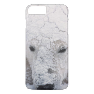 Coque iPhone 7 Plus Ours blanc, Urus Maritimus, Arctique, Churchill,