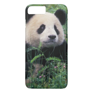 Coque iPhone 7 Plus Panda géant dans l'herbe, vallée de Wolong,