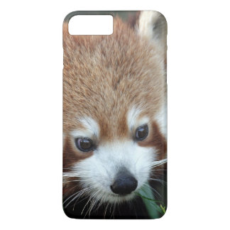 Coque iPhone 7 Plus Panda rouge, zoo de Taronga, Sydney, Australie