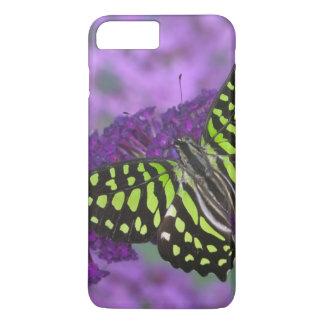 Coque iPhone 7 Plus Photographie de Sammamish Washington du papillon