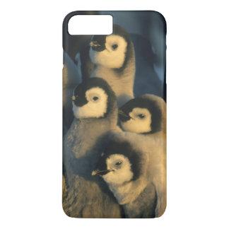 Coque iPhone 7 Plus Poussins de pingouin d'empereur dans la garderie,