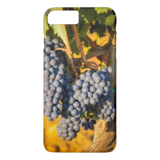 Coque iPhone 7 Plus Raisins de Sangiovese dans un vignoble